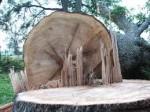 DESTRUCTION DES FORÊTS ET ABATTAGE DES ARBRES SUR LES LIEUX PUBLICS EN ALGÉRIE / Une oeuvre de ces prédateurs non inquiétés parce que... bien protégés dans ACTUALITÉ abattage-des-arbres-11-150x112