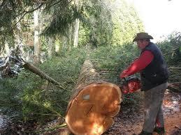 abattage-des-arbres-2