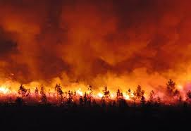 FEUX DE FORÊTS EN ALGÉRIE / Les prédateurs continuent de sévir en toute... impunité dans ACTUALITÉ feu-de-foret-1